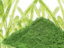 Sistema immunitario giù? Alga Clorella, sport e cibo sano