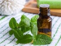 Oli essenziali: la menta nella medicina alternativa