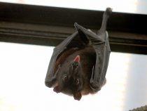 L'importanza dei pipistrelli | Giardinauta!! Coltivando il tuo pollice verde….