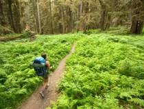 Viaggi verde In Bear Country
